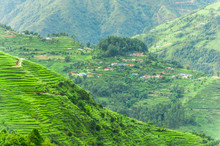 Landscape In Green Season