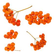 Rowan Brush Ripe Red Berries S...
