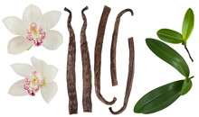 Vanilla Isolated On White Background Set. Orchid  Flower, Stick Or Dry Bean And Green Leaves Group Collection