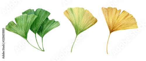 Carta da parati Watercolor Ginkgo Biloba Green and Yellow Leaves Isolated on White Background