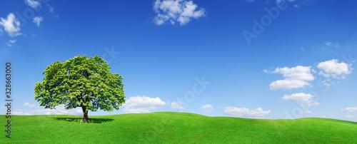 Fotografie, Obraz Idyll, panoramic landscape, lonely tree among green fields