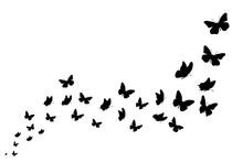 Vector Silhouette Of Butterfli...