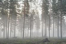 Cold Morning In Central Sweden...