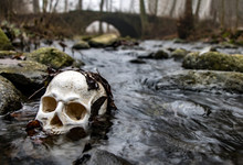 Human Skull In Water In Forest...