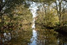 Sumpf Luisiana, USA