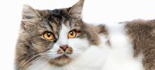 Cute Tabby Kitten Isolated On ...