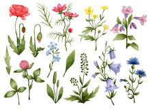 Watercolor Set With Meadow Flo...