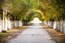 Autumn Treeline Tunel.  Avenue...