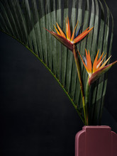 Birds Of Paradise In Pink Agai...