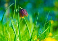 Purple Flower On Blurred Yellow Green Background