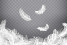 White Feather Background. Clos...