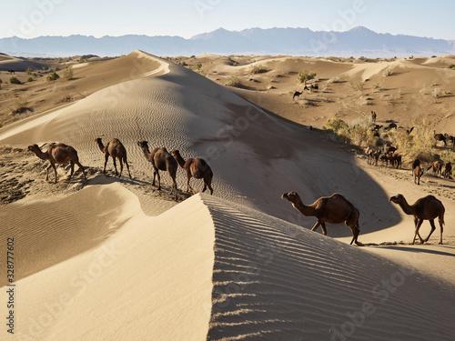 Caravane dans le désert Canvas Print