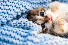 Cute Tabby Kitten Relaxing On ...