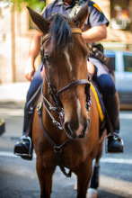 Policeman On His Horse In New York City