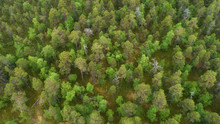 Aerial View Of Green Forest Ca...