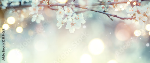 Obraz Spring Nature Easter art background with blossom. Beautiful nature scene with blooming flowers tree and sun flare. Sunny day. Spring flowers. Beautiful Orchard. Abstract blurred background. Springtime - fototapety do salonu