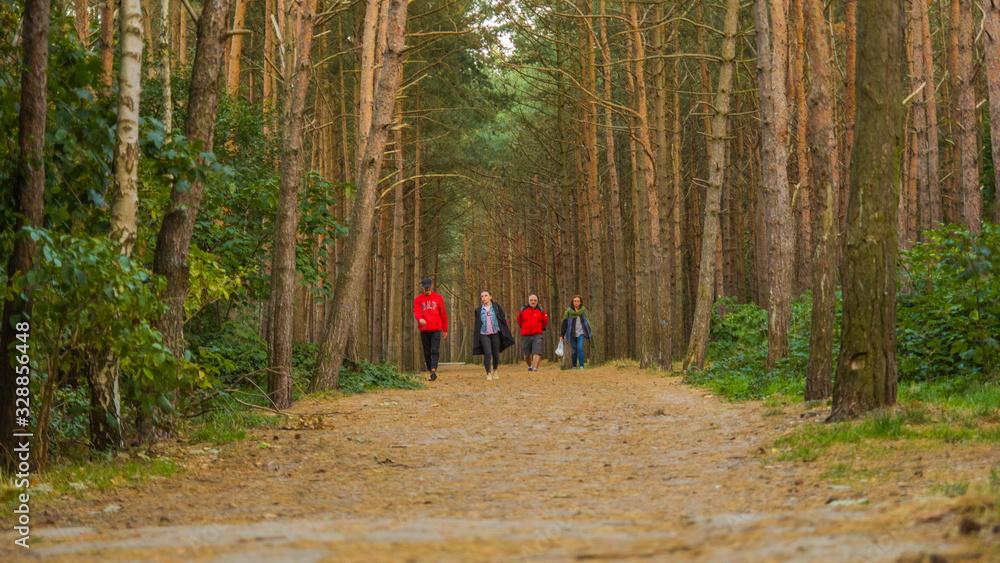 Fototapeta piękny krajobraz las raj polska