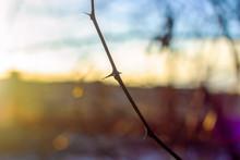 Spiny Branch Background Sky An...