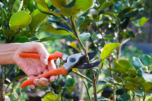 Photo Gardener pruning trees with pruning shears on nature background.