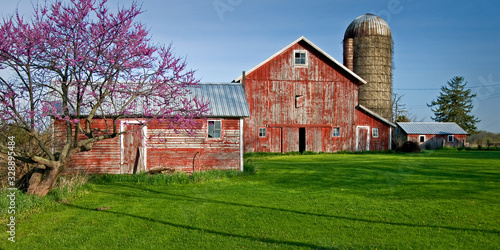 A rural Midwest farm scene with barns and blooming redbud tree. Fotobehang