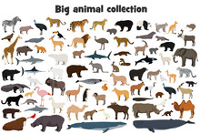 Big Animal Collection. Set Of ...