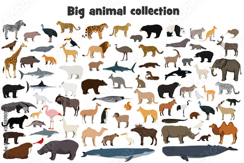 Big animal collection. Set of wild forest, arctic and antarctic, jungle, mountain, african, australian animals, marine mammals, birds, fish. Realistic animals. Stock vector illustration.