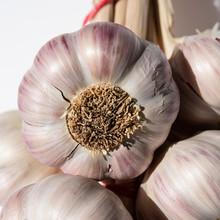White And Purple Garlic Head O...