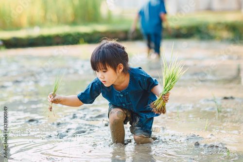 Fotografia Asian kid planting rice in the muddy paddy field for learning how the rice growing