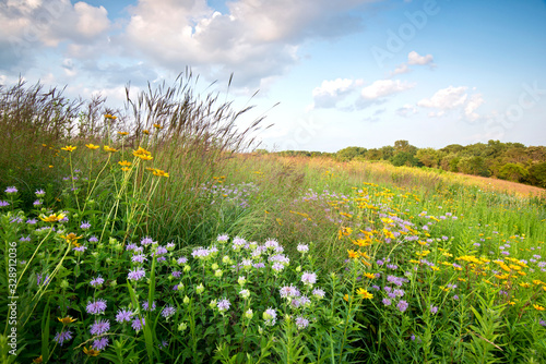Stampa su Tela Sunset light on native grasses wildflowers in a Midwest prairie.