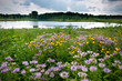 Storm clouds move along the horizon over summer wildflowers and a small pond.