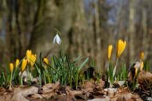 The Beginning Of Spring  - Ear...
