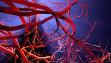 New Blood Vessel Formation