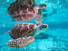 A Sea Turtle Swimming Underwat...