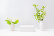 Empty white box and branches with green leaves in a vase on a light background. Mockup banner for display of advertise product