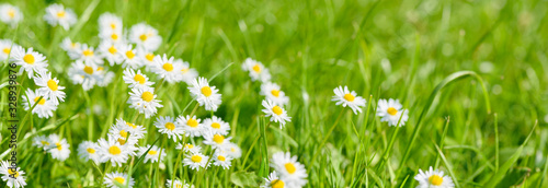 Fototapeta flowers on field with copy space at springtime