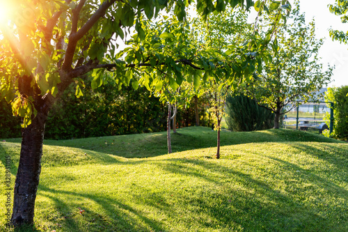 Beautiful green english fruit tree garden with mown grass lawn hills, knolls and hilloks at warm evening sunset day time Canvas Print