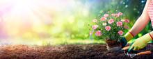 Gardening - Gardener Planting ...