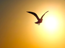 Single Seagull Flying Into The Orange Sunset