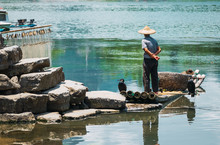 Cormorant Fisherman In Traditional Showing Of His Birds On Li River In Xingping, Guangxi Province, China.