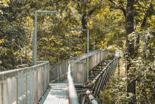 Sky Bridge In The Park