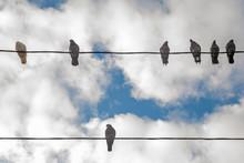 Birds On Elecricity Wires Agai...
