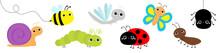 Snail, Beetle, Ladybug Ladybir...