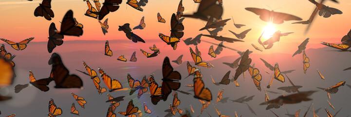 roj leptira monarha, skupina Danaus plexippus tijekom zalaska sunca