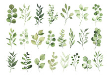 Collection Of Watercolor Greenery Branch Leaves Twigs Floral Plant Forest Herbs Isolated On White Background. Botanical Spring Summer Leaf Illustration For Wedding Invitation Card, Frame And Wreath
