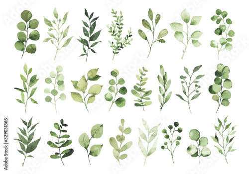 Obraz Collection of watercolor greenery branch leaves twigs floral plant forest herbs isolated on white background. Botanical spring summer leaf illustration for wedding invitation card, frame and wreath - fototapety do salonu