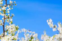 Beautiful Closeup Spring Bloss...