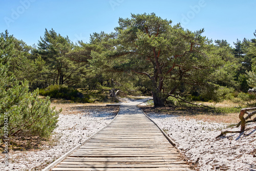 Wooden boardwalk through sand dune leading to a beach. Canvas Print