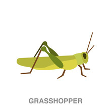 Grasshopper Flat Icon On White...