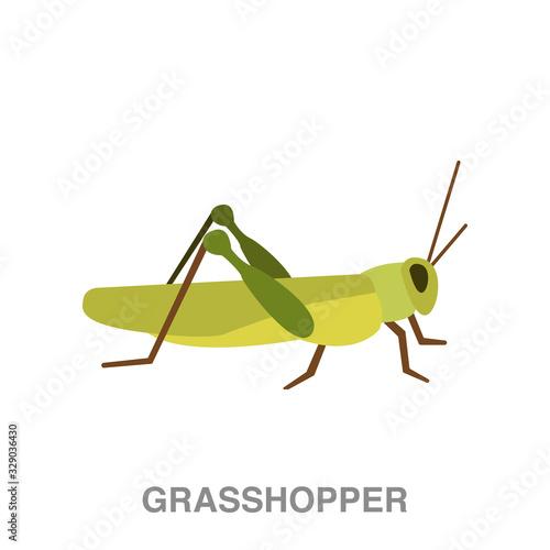 Fototapeta grasshopper flat icon on white transparent background