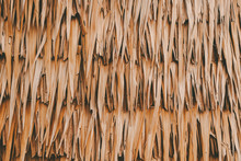 Nature Dry Palm Leaf Wall Text...